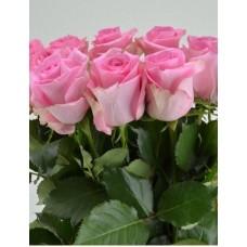 Роза Revival 50cm