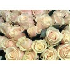 Роза Talea 50cm