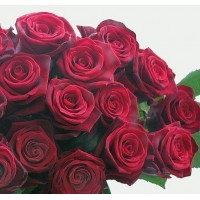Роза Grand Prix 50cm
